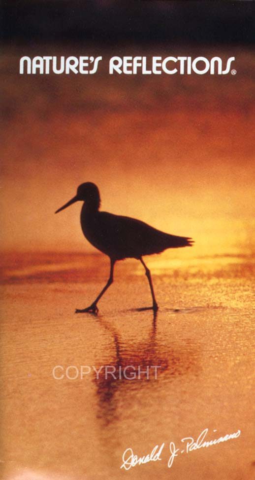 Nature's Reflections Limitied ShoreBird